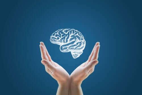 Création de mini-cerveaux : le début du clonage humain ?