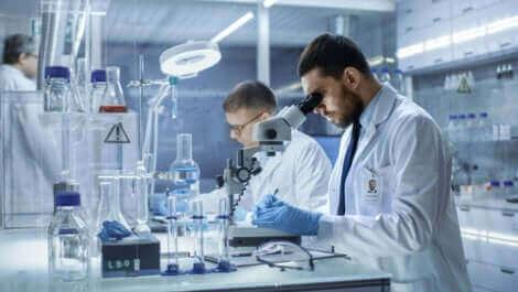 Des mini-cerveaux ont été créés en laboratoire.