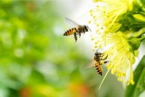 La peur des abeilles ou apiphobie, une phobie répandue