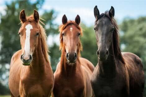Hypophobie : la peur des chevaux.