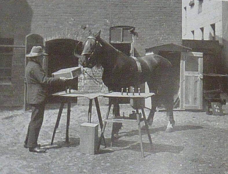 Clever Hans, le cheval qui faisait des mathématiques.