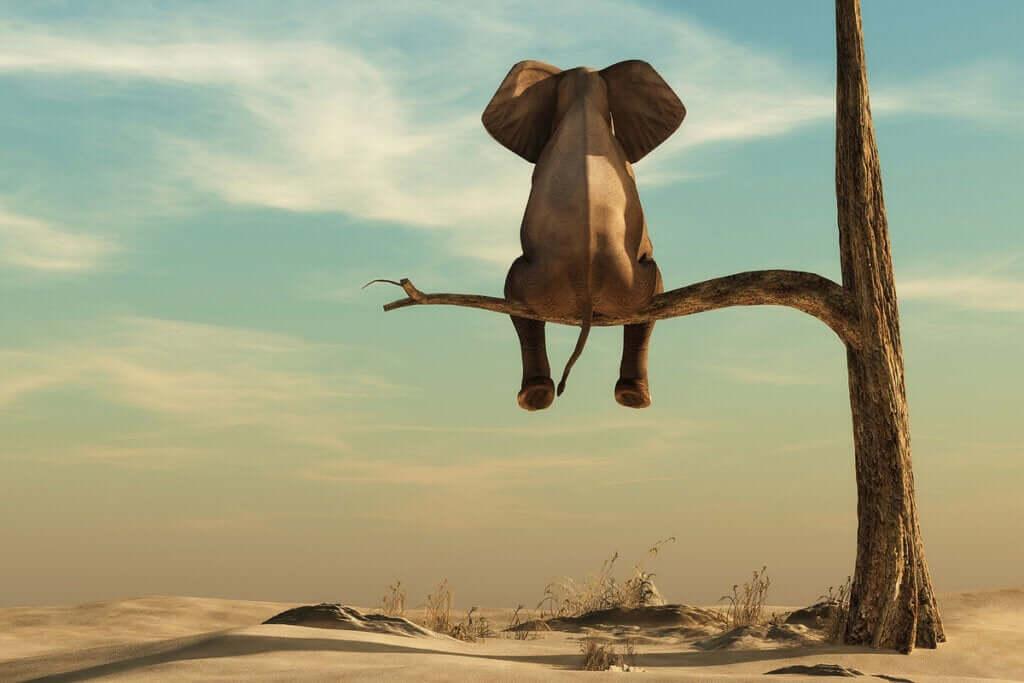 Grossophobie : le véritable éléphant de la salle