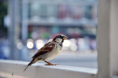 Certains ont la phobie des oiseaux.