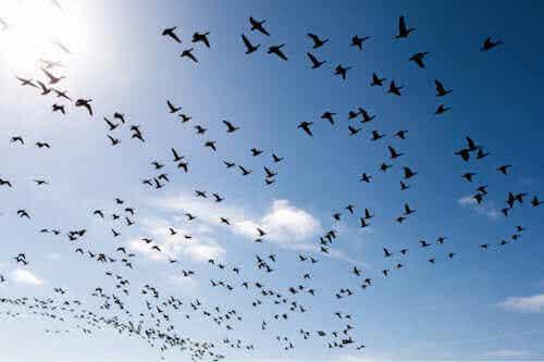Comment surmonter la peur des oiseaux ?