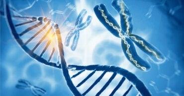 Syndrome de Klinefelter : un chromosome X en plus