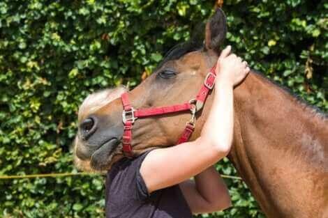 Une démonstration d'affection entre une femme et un cheval.