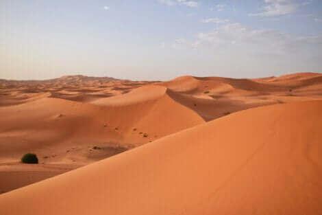 Une illustration d'un désert.