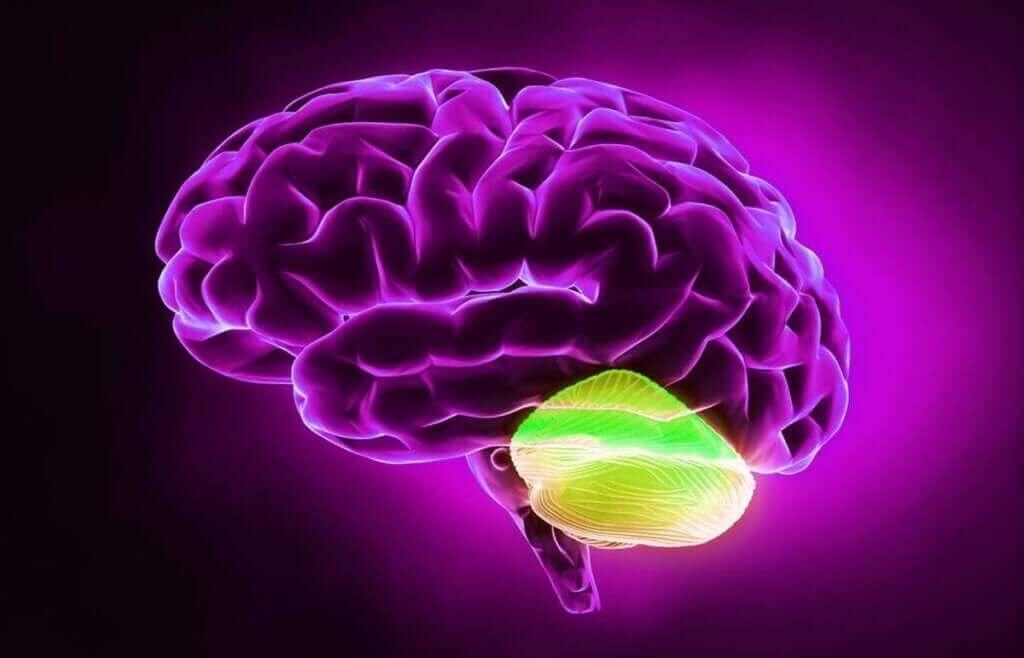 La relation incroyable entre le cervelet et la pensée divergente