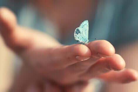 Un papillon sur une main.