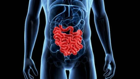 Un scanner d'un intestin.
