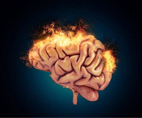 L'activité du cerveau réactif.