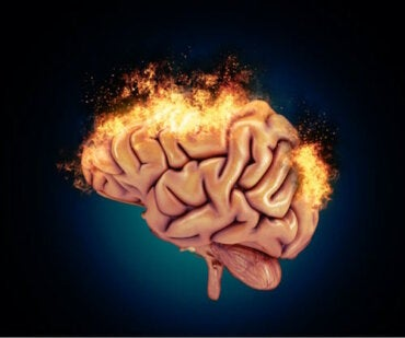 Les bases neurobiologiques de l'agressivité