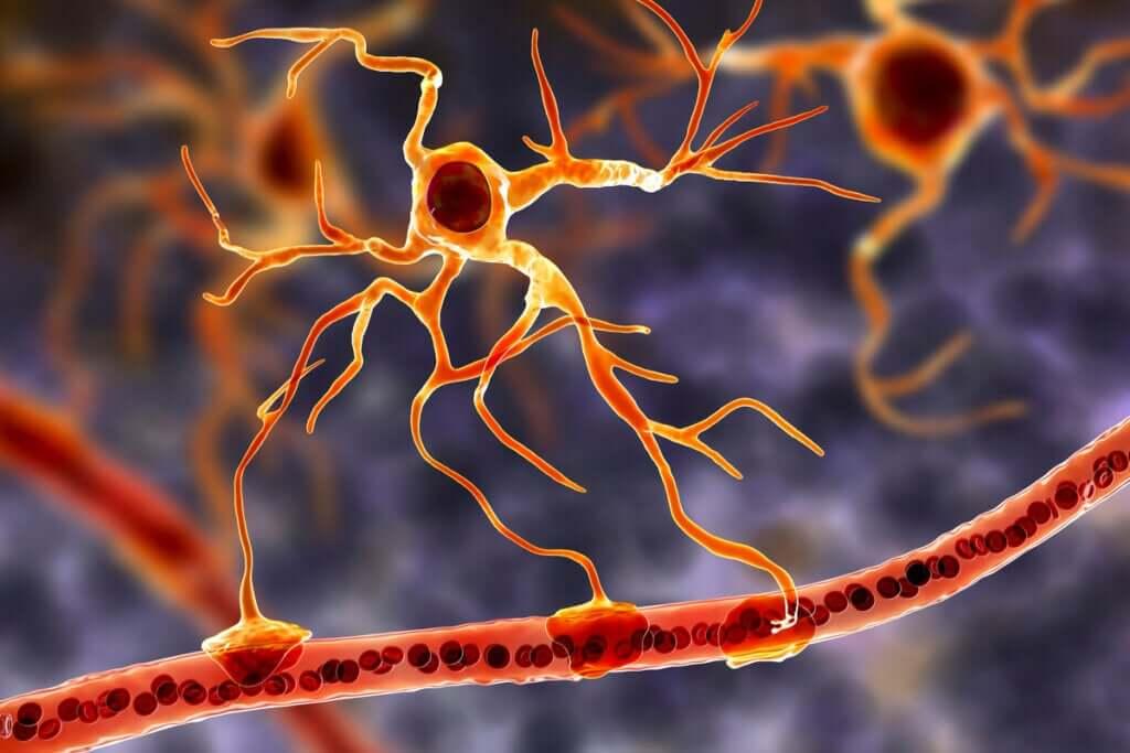 Les cellules gliales : la base fonctionnelle du cerveau