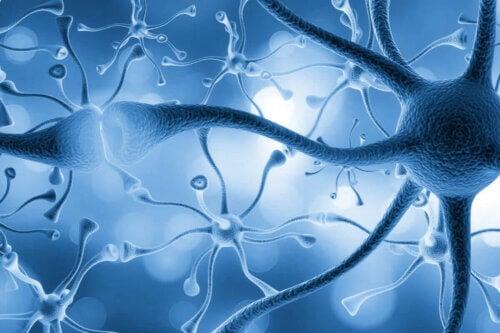 Des neurones connectés.