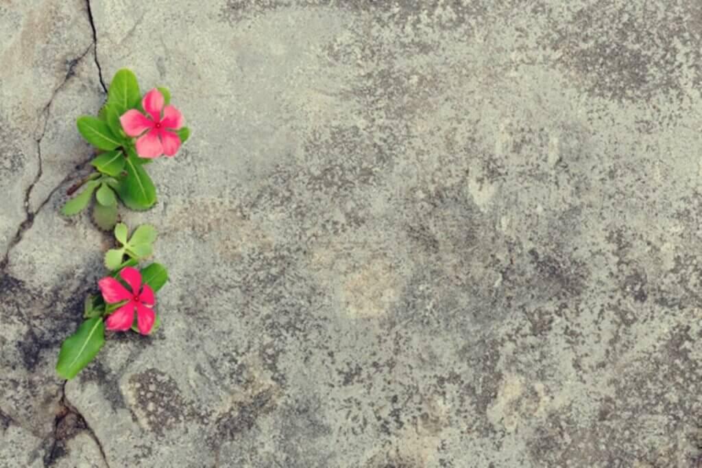 Des fleurs qui sortent d'une fissure.