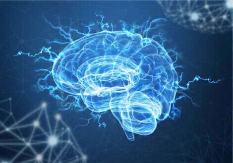Une illustration d'un cerveau.