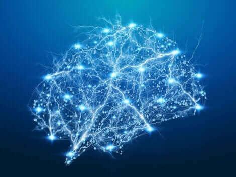 Une illustration du cerveau.
