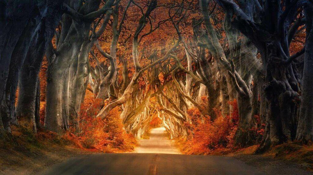 Une illustration d'une forêt.