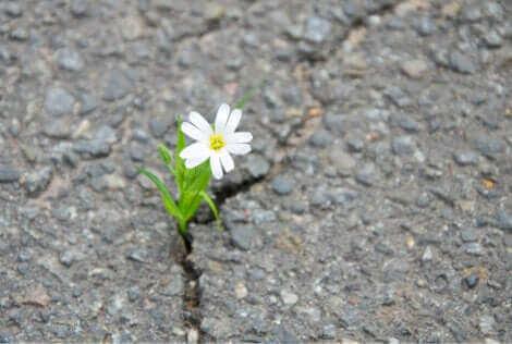 Une fleur qui pousse sur la route.