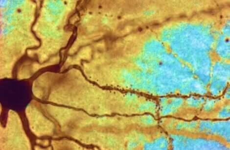 Découverte sur les neurones.