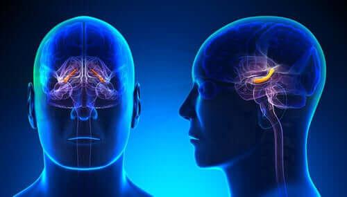 La neurobiologie de l'anxiété.