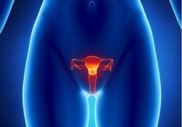 Œstrogènes : caractéristiques et fonctions