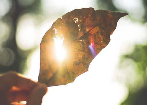Une feuille au soleil.