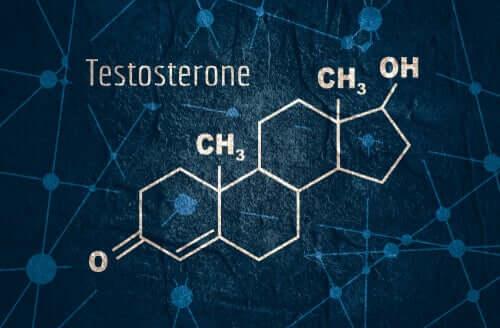 Testostérone : caractéristiques et fonctions