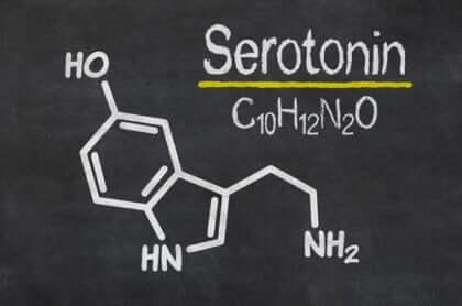 Sérotonine et noyaux de raphé.