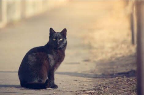 Un chat noir assis.