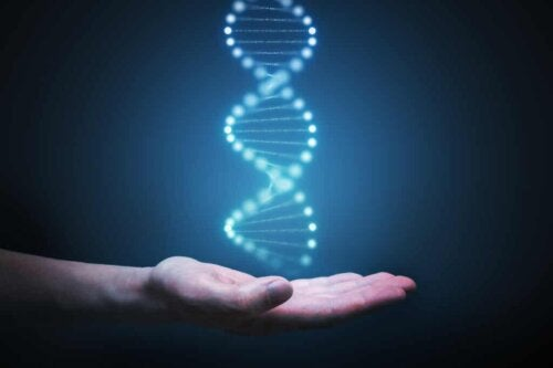 ADN dans une main.