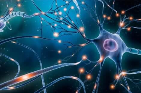 Un neurone.