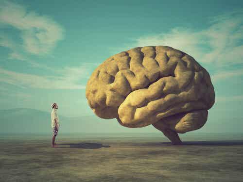 Cerveau et homme.
