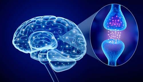 Qu'est-ce que la psychoneuroimmunologie ?