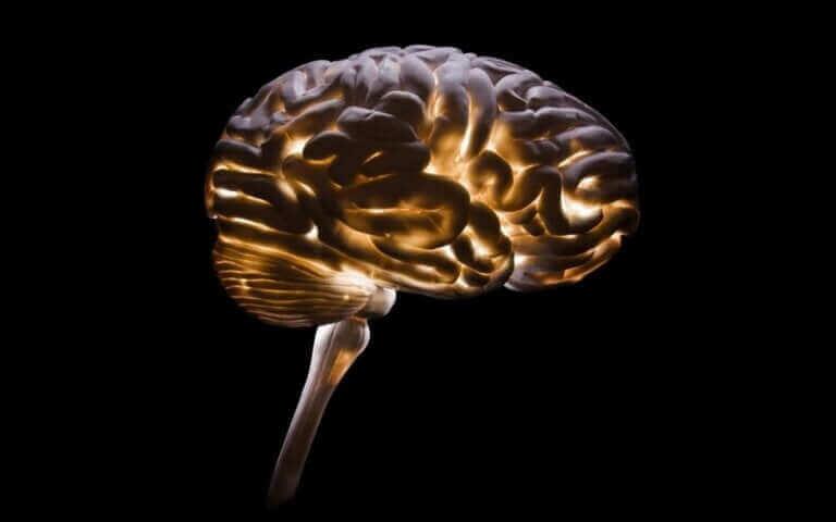 Neurocriminologie : une discipline de plus en plus nécessaire