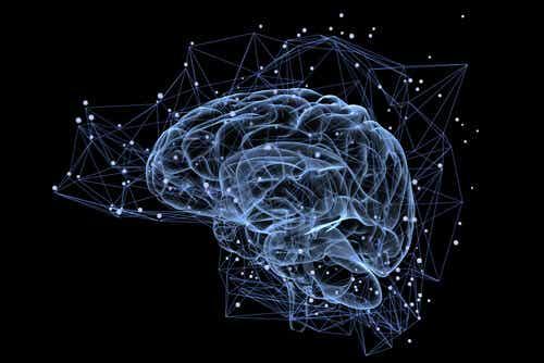 Connexions du cerveau.