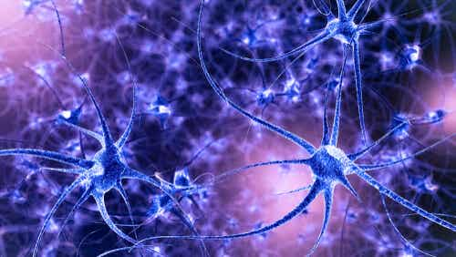 Des neurones actifs.