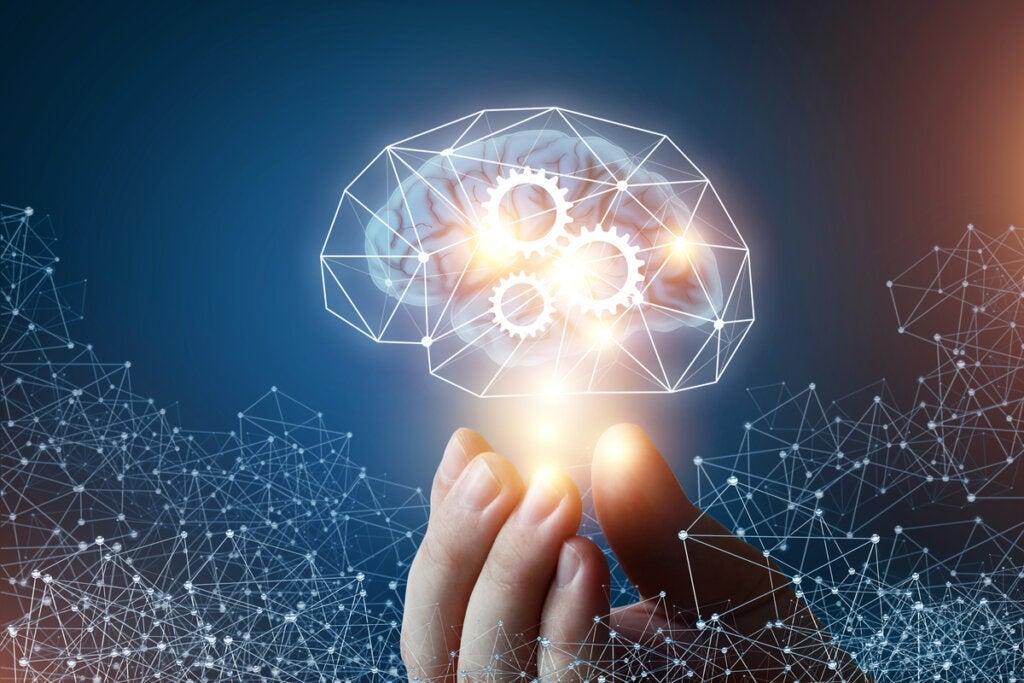 Les 4 différences entre l'intelligence fluide et l'intelligence cristallisée