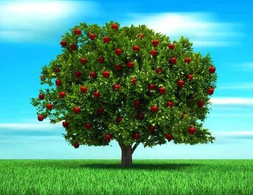 La parabole de l'arbre, une histoire sur l'amour d'un père