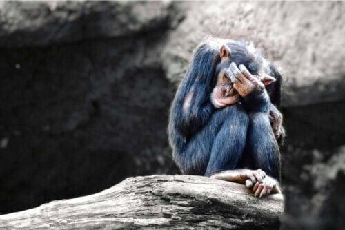 Les animaux peuvent-ils souffrir de dépression ?
