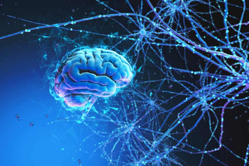 Des neurones.