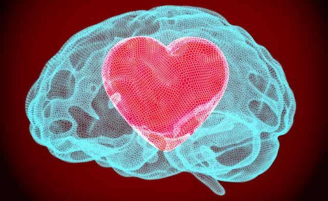 Un cœur dans un cerveau.