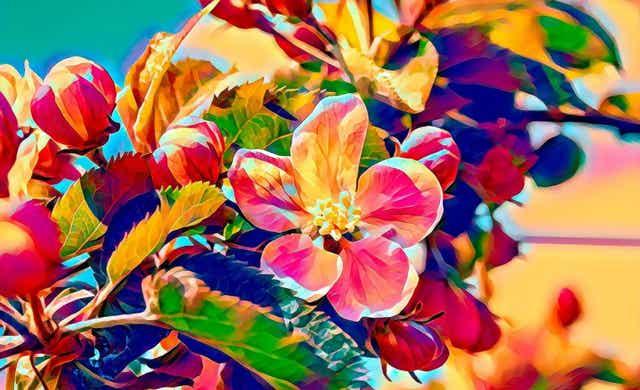 Des fleurs colorées.
