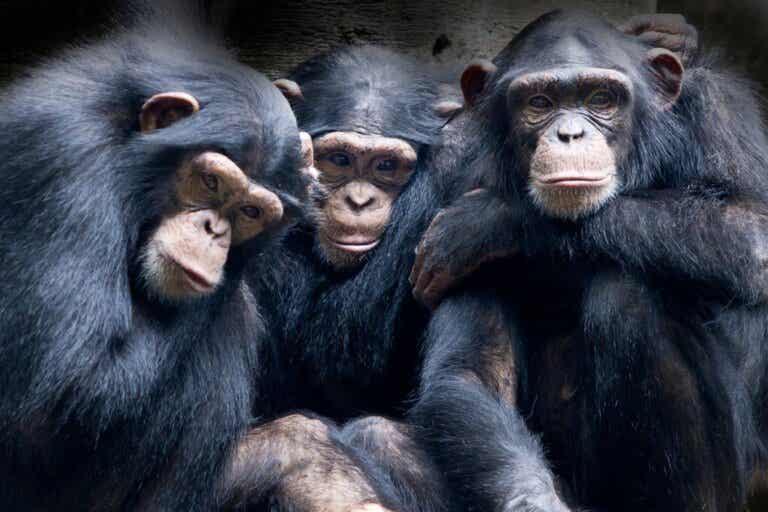 Les 4 animaux les plus empathiques