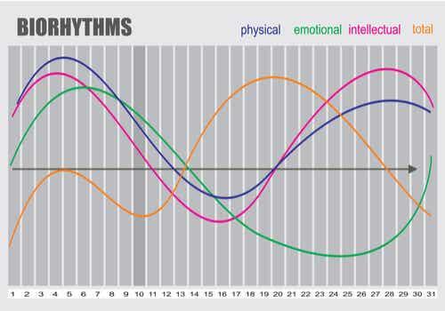 Les effets de rythmes circadiens.