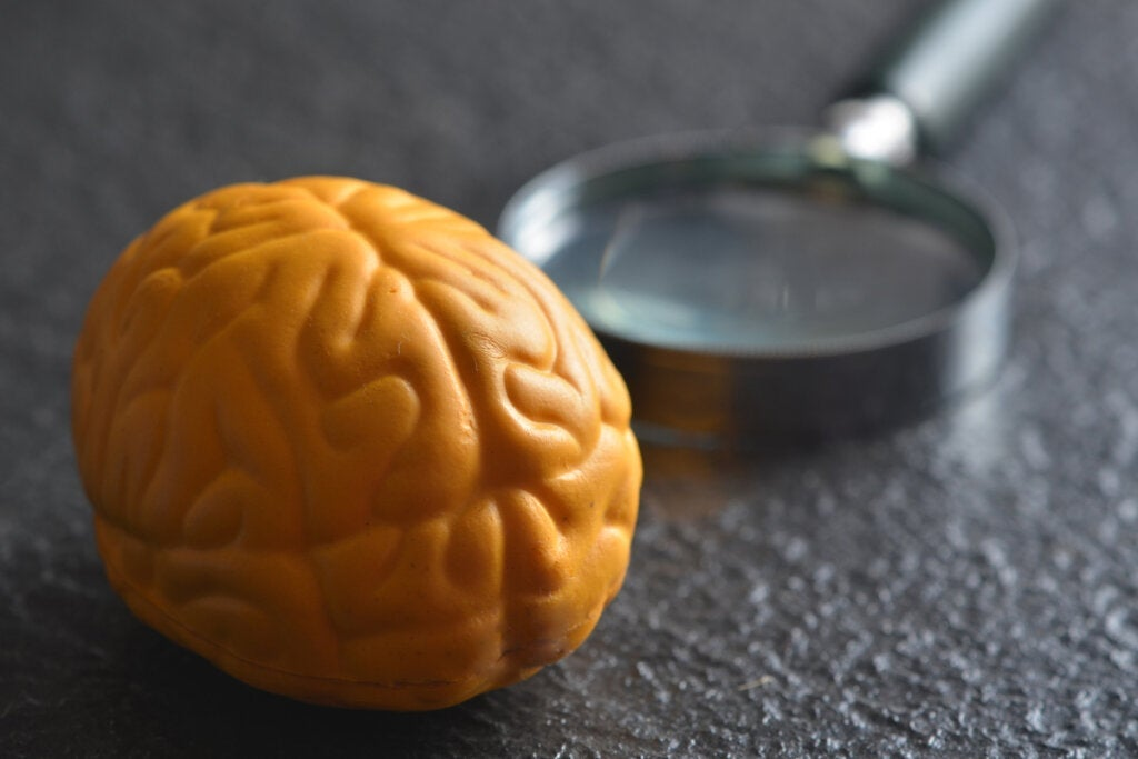Pourquoi le cerveau a-t-il deux hémisphères ?