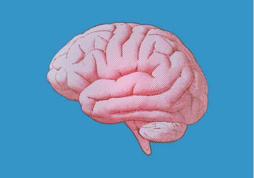 Le cerveau selon Wundt.